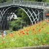 Iron Bridge with poppies