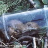 Dead Weasel in Bottle, nr Acton Turville, Gloucestershire 1986