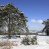 Ashdown Forest in Snow