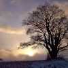 Tree in snow in Tanfield