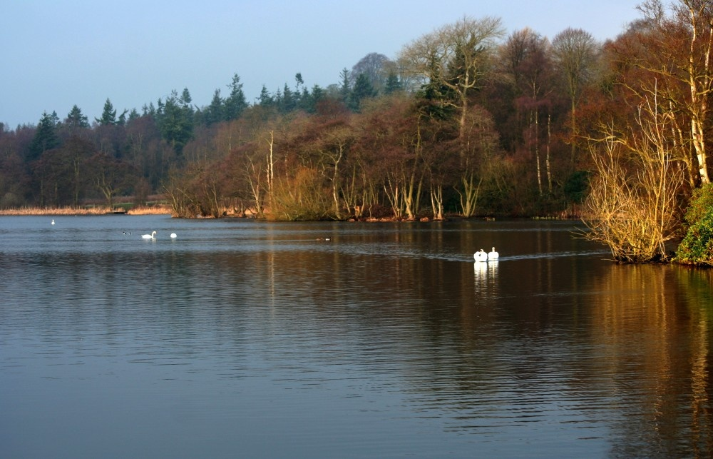 Sawns on Bolam Lake, Northumberland