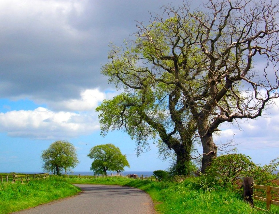Country road between Amble and Alnmouth, Northumberland.