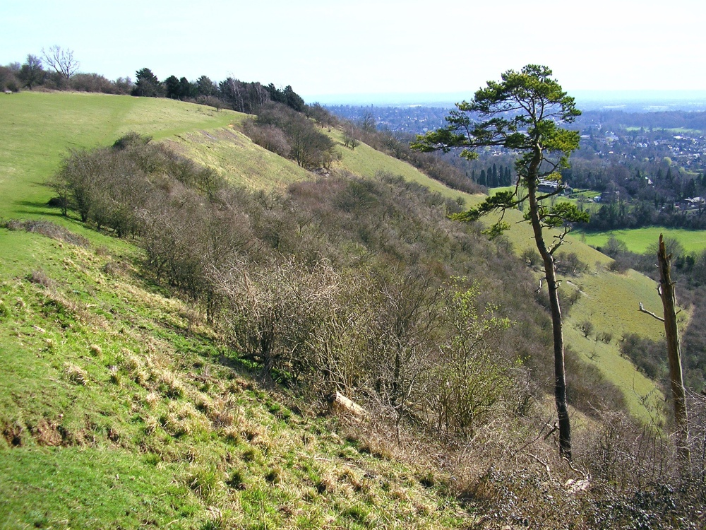Colley Hill, Reigate, Surrey.