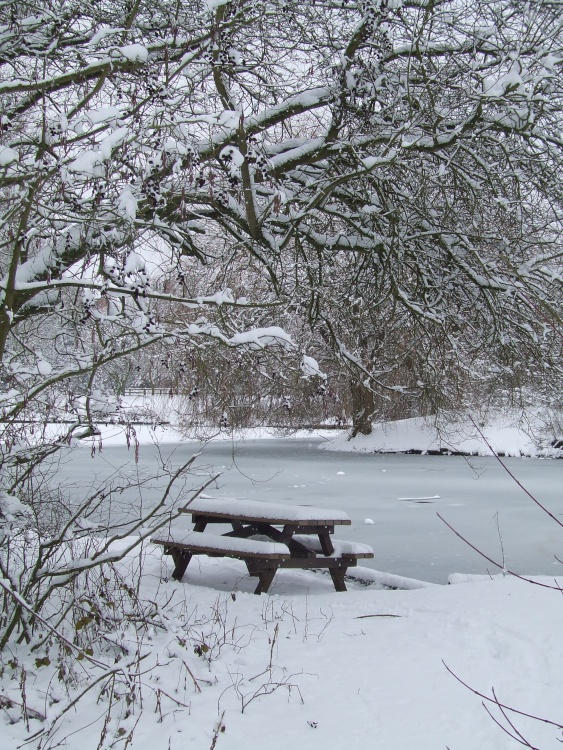 Winter picnic in the park