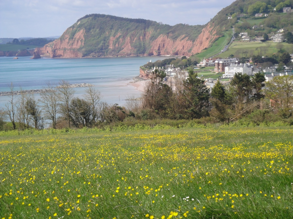 Quot Exmouth Coastal Walk Looking Towards Sidmouth Quot By Romina